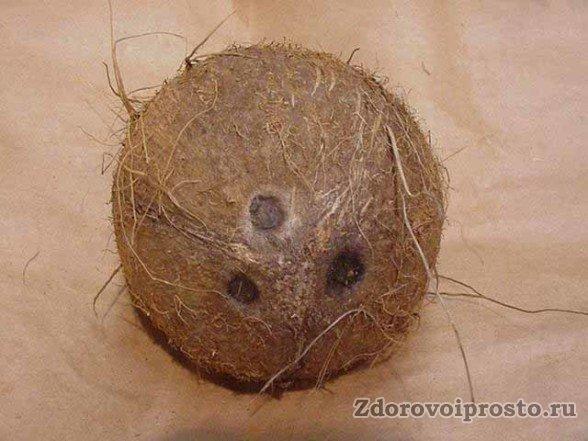 Согласитесь, что перед тем, как кушать кокос, этому вихрастому другу стоит подровнять его космы.