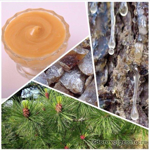 Кедровый мед полезные свойства