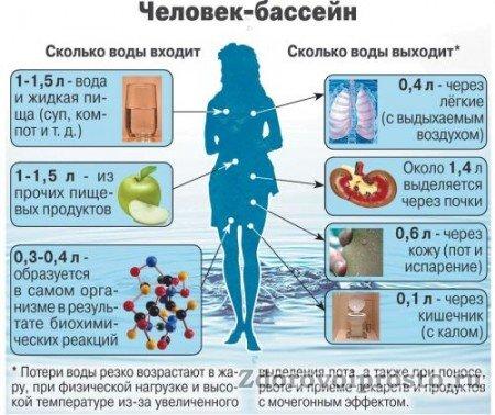 Схема, наглядно показывающая, что сторонники данной теории на тему, сколько воды нужно пить человеку в день, мягко говоря, не во всём правы.